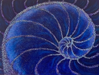 purple blue nautilus - small size